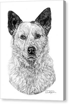 Australian Cattle Dog Canvas Print by Dan Pearce