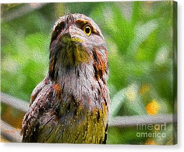 Australian Frogmouth Canvas Print by Judy Kay