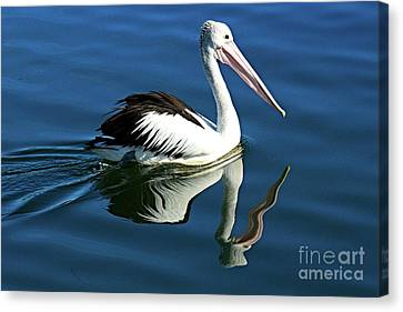 Australian Pelican Bird,  Pelecanus Conspicillatus, Close-up Swimming With Water Reflections Canvas Print by Geoff Childs