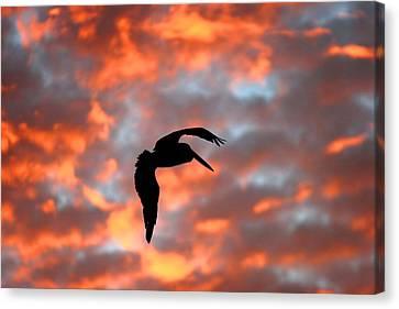 Australian Pelican Silhouette Canvas Print