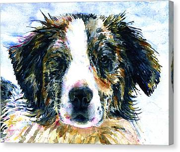 Australian Shepherd Jake Canvas Print by John D Benson