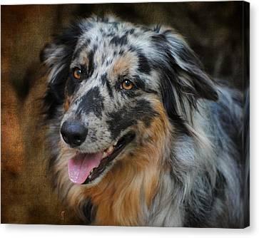 Australian Shepherd Portrait Canvas Print by Jai Johnson