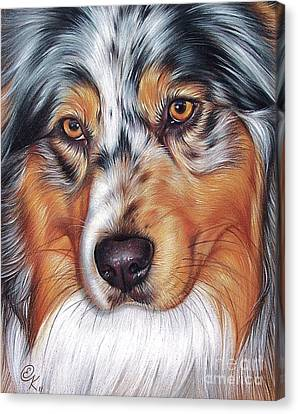 Australian Shepherd Canvas Print by Elena Kolotusha