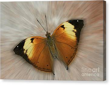 Autumn Leaf Butterfly Zoom Canvas Print