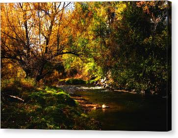 Autum Spring Canvas Print by Mark Courage
