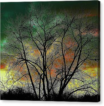 Autumn 4 Canvas Print by Todd Sherlock