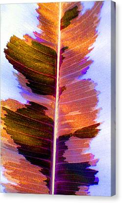 Autumn Abstract Canvas Print by Carolyn Stagger Cokley