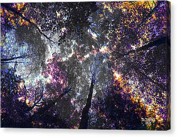 Autumn Abstract Canvas Print by David Stasiak