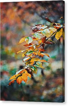 Canvas Print featuring the photograph Autumn Aesthetics by Parker Cunningham