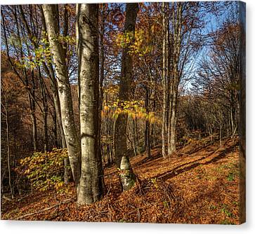 Canvas Print featuring the photograph Autumn Afternoon In Forest by Davorin Mance