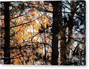 Autumn Among The Pines Canvas Print by Kristi Beers-Mason