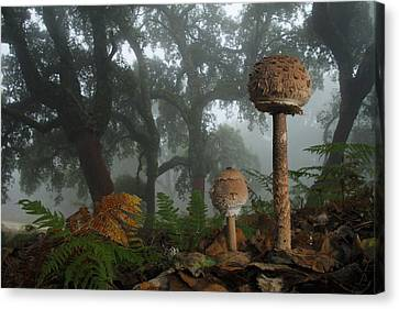 Mushroom Canvas Print - Autumn by Andres Miguel Dominguez