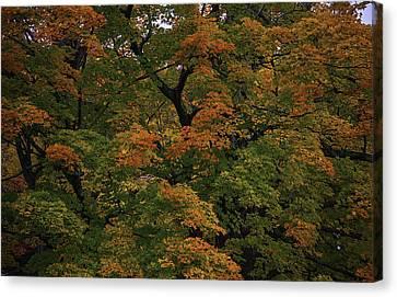 Autumn Arrives Canvas Print by Garry Gay