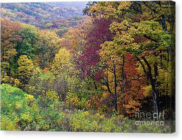 Canvas Print featuring the photograph Autumn Arrives In Brown County - D010020 by Daniel Dempster