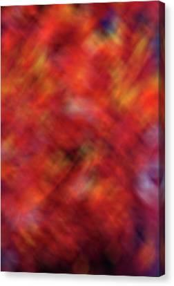 Autumn Ash Tree 4 Canvas Print by Steve Ohlsen
