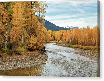 Autumn Aspen By The River Canvas Print by Mary Jo Allen