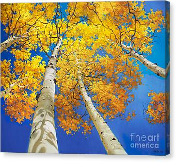 Autumn Aspen Canopy Canvas Print by Gary Kim