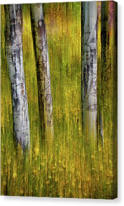 Canvas Print featuring the photograph Autumn Aspen Recollections by John De Bord