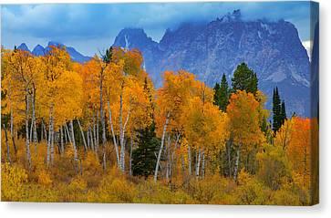 Autumn Aspens Below Mount Moran Canvas Print