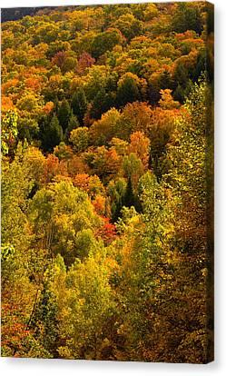 Autumn At Acadia Canvas Print