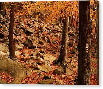 Canvas Print - Autumn At In Ny by Raymond Salani III