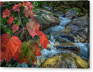 Maine Mountains Canvas Print - Autumn At Katahdin Stream by Rick Berk