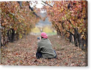 Canvas Print featuring the photograph Autumn At Lachish Vineyards 1 by Dubi Roman