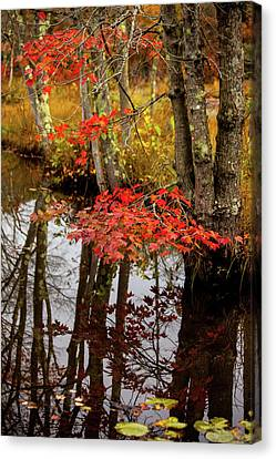 Autumn At The Pond Canvas Print by Karol Livote