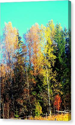 Wake Me Up When The Nature Is Preparing For Another Winter  Canvas Print by Hilde Widerberg