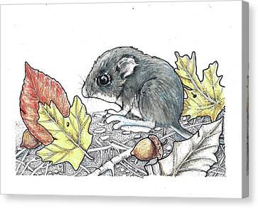 Autumn Baby Canvas Print by Julie Townsend