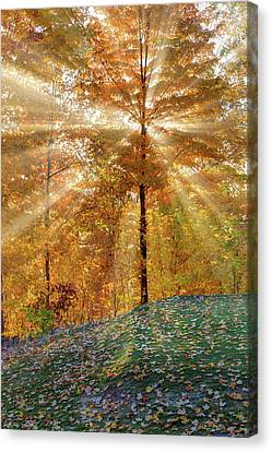 Maple Tree Canvas Print - Autumn Beams by Bill Wakeley