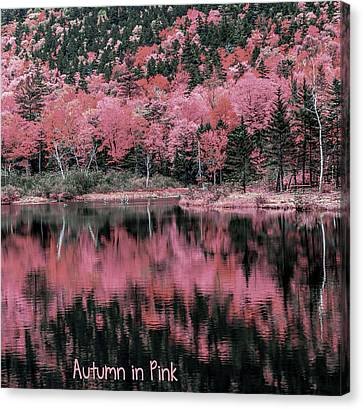Autumn Beauty In Pink Canvas Print by Black Brook Photography