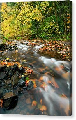 Autumn Leaf Canvas Print - Autumn Beneath by Mike  Dawson