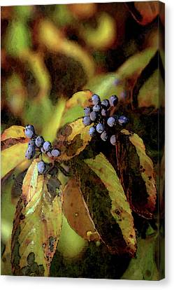 Autumn Berries 6047 Dp_2 Canvas Print