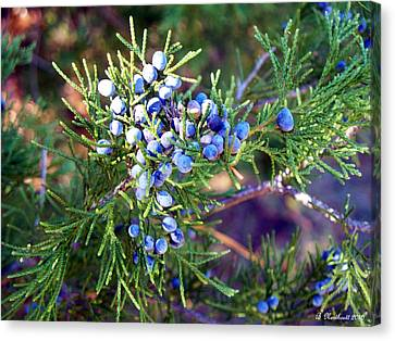 Canvas Print featuring the photograph Autumn Berries by Betty Northcutt