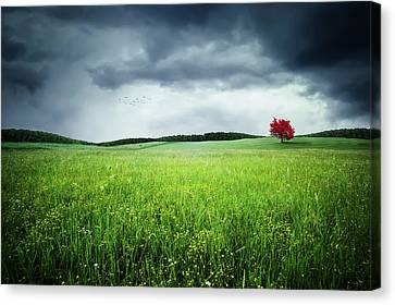 Canvas Print featuring the photograph Autumn by Bess Hamiti