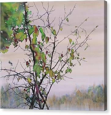 Autumn Birch By Sand Creek Canvas Print by Carolyn Doe