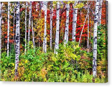 Canvas Print featuring the painting Autumn Birches by Christopher Arndt