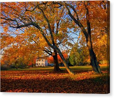 Autumn Blaze Canvas Print by Dianne Cowen