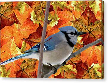 Autumn Blue Jay Canvas Print by Debra     Vatalaro
