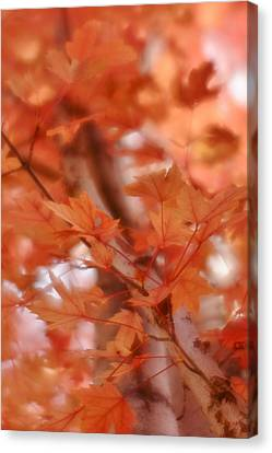 Canvas Print featuring the photograph Autumn Blush by Diane Alexander