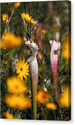 Autumn Bog  Canvas Print by Katherine White