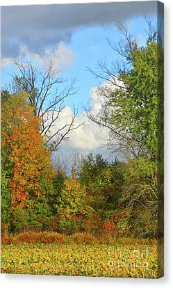 Autumn Breeze Nature Art Canvas Print by Robyn King