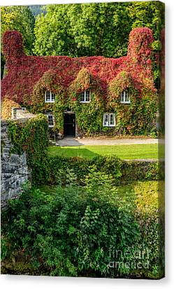 Tea Tree Canvas Print - Autumn Brilliance by Adrian Evans