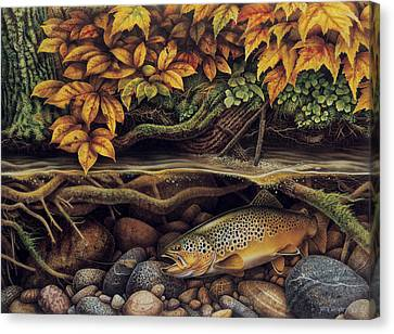 Brown Trout Canvas Print - Autumn Brown Trout by JQ Licensing