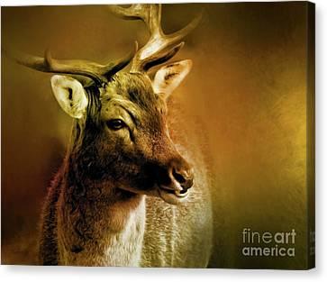 Rack Canvas Print - Autumn Buck by KaFra Art