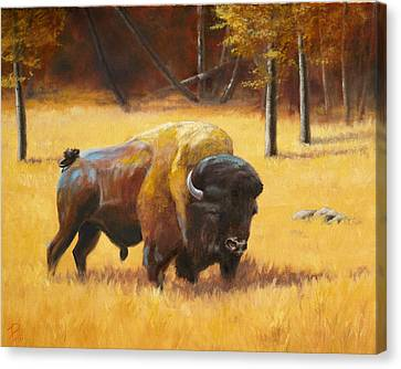 Autumn Bull Canvas Print by Patrick Entenmann