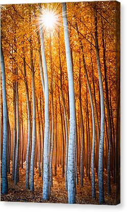 Canvas Print featuring the photograph Autumn Canopy Burst by Dan Mihai