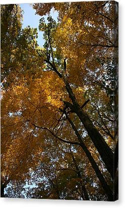 Canvas Print featuring the photograph Autumn Canopy by Shari Jardina