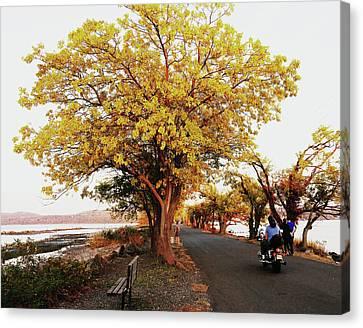Autumn Causeway Canvas Print